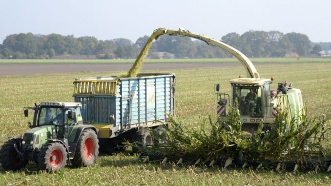 Maisfeldzug - Foto: Gerstenkorn