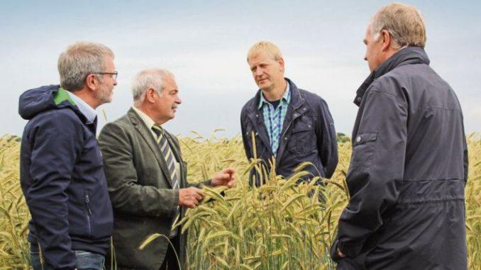 Weizenvermarktung wird schwieriger -