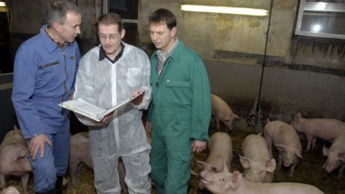 Tierarzt im Stall