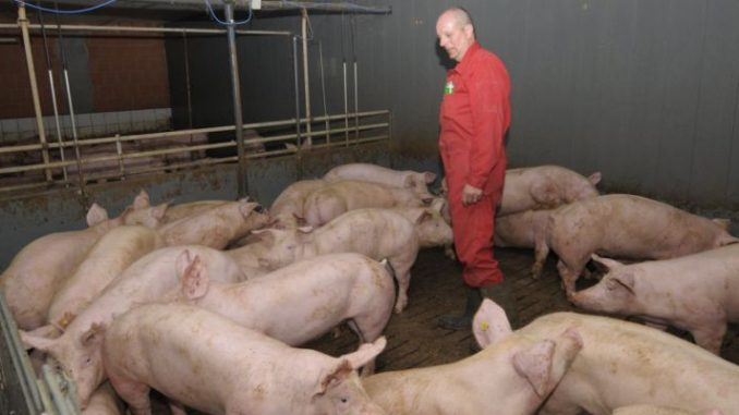 Bauern werben um mehr Geld fürs Tierwohl - Foto: landpixel
