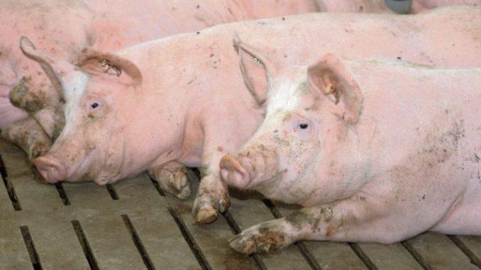 Erhebliche Kosten für Kontrollen - Foto: agrar-press