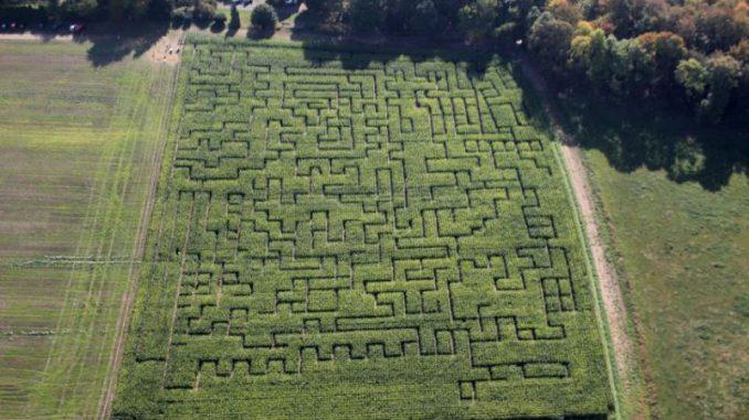 Maislabyrinthe laden zum Gruseln ein - Foto: landpixel