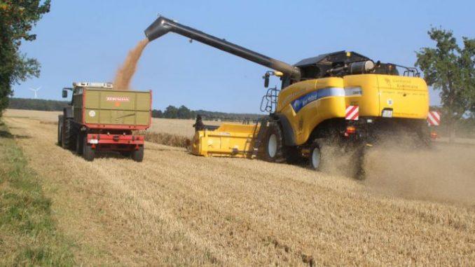 Ein schwieriges Getreidejahr -