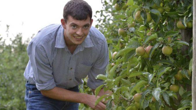 Apfelbauern pflücken die ersten frühen Sorten -