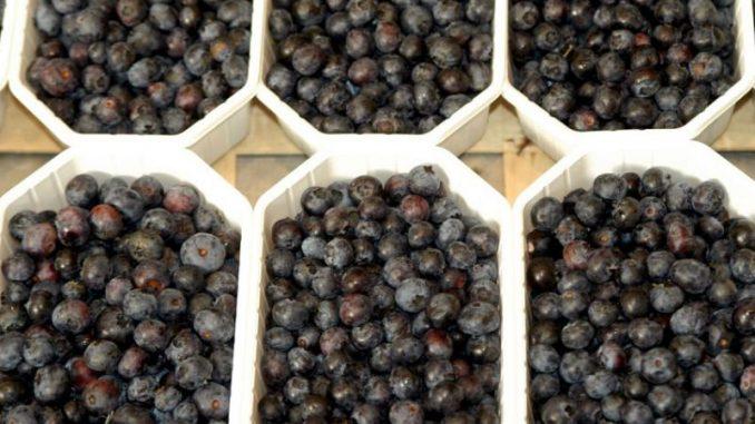 Spargel und Beeren maschinell ernten und verpacken - Foto: landpixel