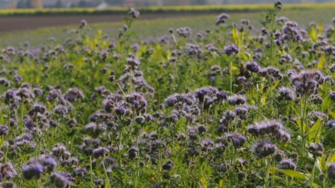 Greening mit Erfolg umgesetzt - Foto: landpixel