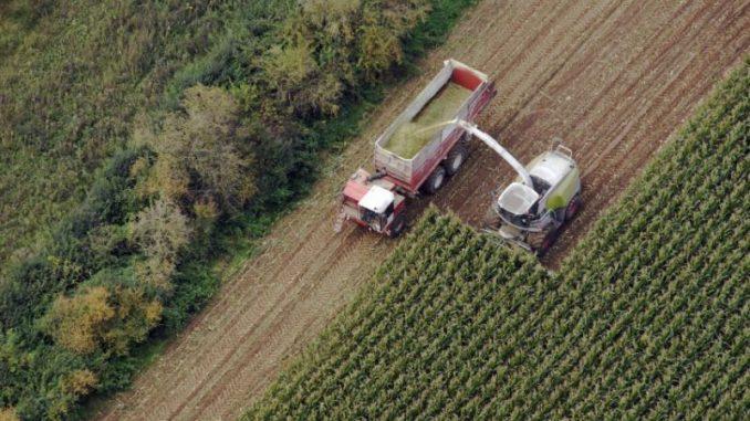 Planungen für die Maisernte laufen an - Foto: landpixel