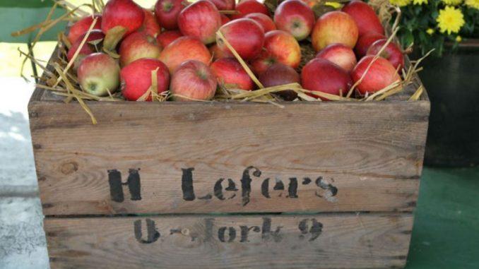 Obstbauern starten in die Apfelsaison -
