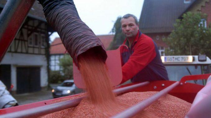 Die Saat für dei Ernte im kommenden Jahr wird gelegt - Foto: landpixel
