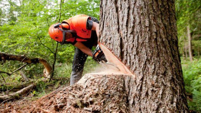 Wohlige Wärme aus dem heimischen Wald -