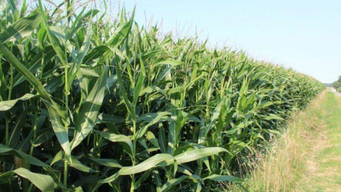 Stabiler Anbau von nachwachsenden Rohstoffen -