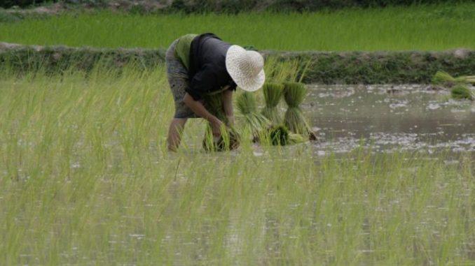 Hunger soll 2030 Geschichte sein - Foto: landpixel