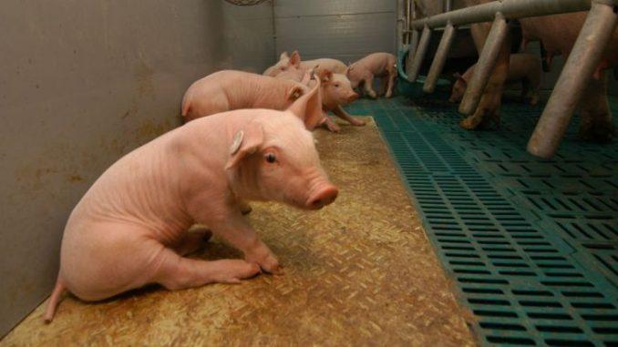 Länder: Mehr Druk beim Tierschutz -