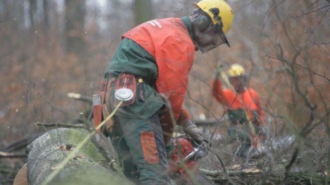 Lollyholz aus Niedersachsens Wäldern - Foto: Landesforsten