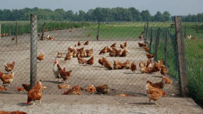NEC-Richtlinie stellt Bauern vor unlösbare Aufgaben -