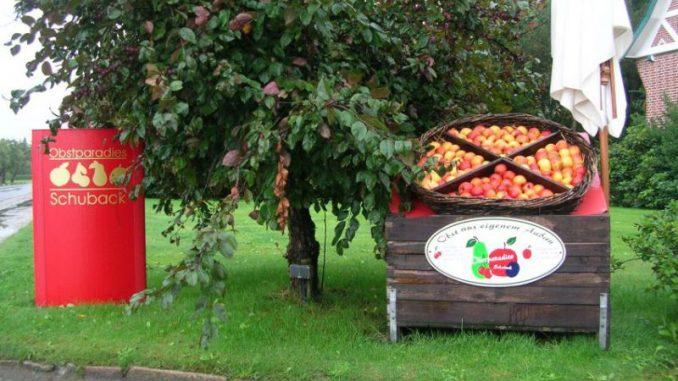 Apfelernte ist noch in vollem Gange -