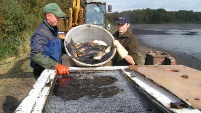 Karpfenteiche in Niedersachsen werden abgefischt - Foto: von Heydebrand