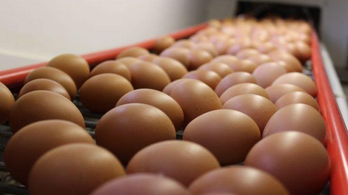 Die Eierpreise müssten steigen! - Foto: Landvolk