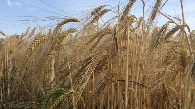 Bauerntag diskutiert über Steuerung der Märkte - Foto: Landvolk