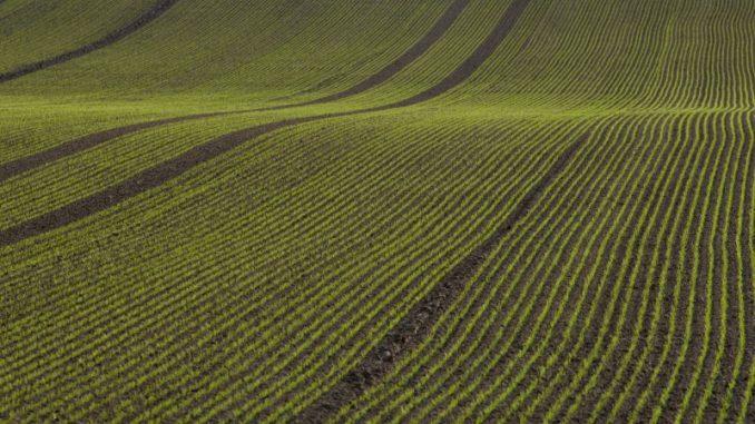 Das Jahr der Bauern neigt sich dem Ende - Foto: landpixel