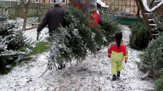 Der pefekte Weihnachtsbaum ist gefragt - Foto: landpixel