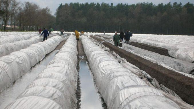 Stiftung fördert Studien zum Arbeitsmarkt - Foto: Landvolk