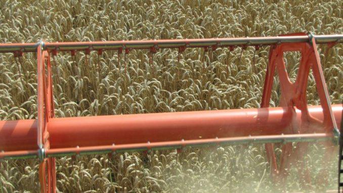 Getreide belibt wichtige Kultur - Foto: Landvolk