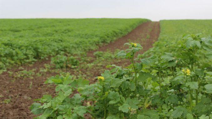 Der Boden bleibt ein wichtiger Faktor - Foto: Landvolk