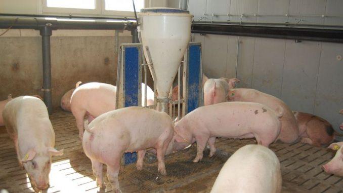 Mehr Futtermittel aus Niedersachsen verkauft - Foto: Landvolk