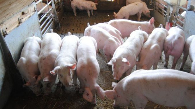 Tierwohl: Finanzierung gesichert - Foto: Landvolk