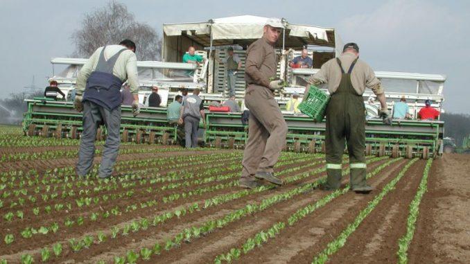 Gemüsebauern tagen in Hamburg - Foto: Landvolk