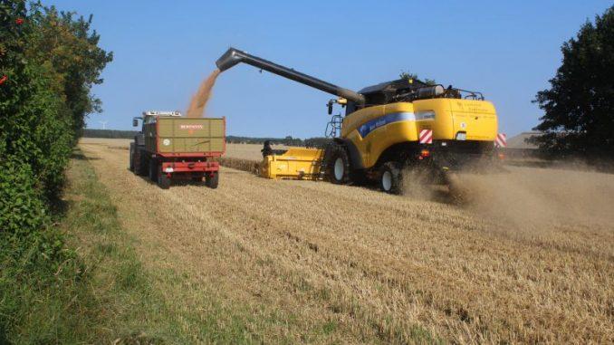 Private Getreidelagerung minimiert das Risiko -