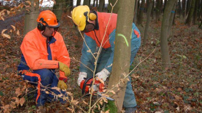 Klimafrage wird auch im Wald beantwortet -