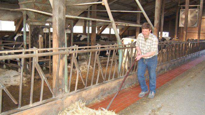 Mehr Mitarbeiter auf landwirtschaftlichen Betrieben - Foto: Landvolk