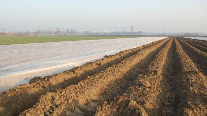 Frühkartoffelanbauer blicken entspannt in den Regen - Foto: Landvolk