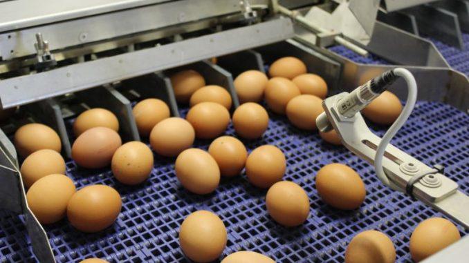 In der Eierfärberei dampft der Kessel rund um die Uhr - Foto: Landvolk