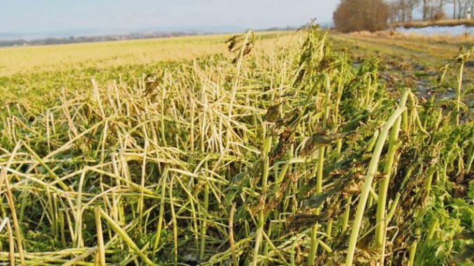Letzte Änderungen zum Agrarantrag - Foto: Landvolk