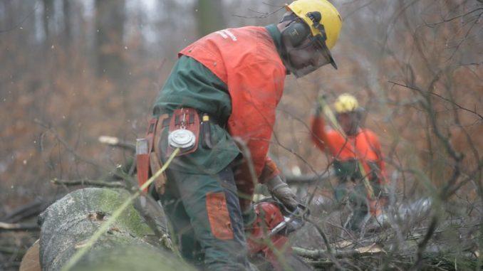 Die niedersächsischen Förster kommen kaum ans Holz - Foto: Landesforsten