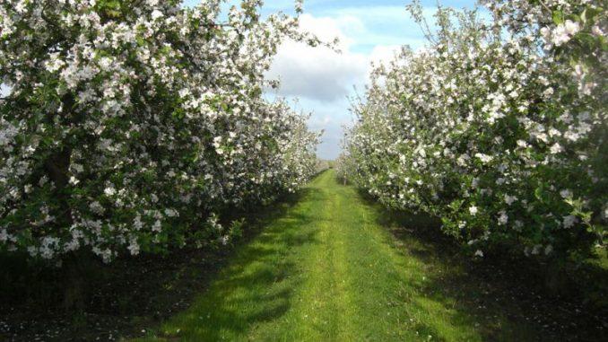 Blüten schnuppern und Schiffe gucken - Foto: Landvolk