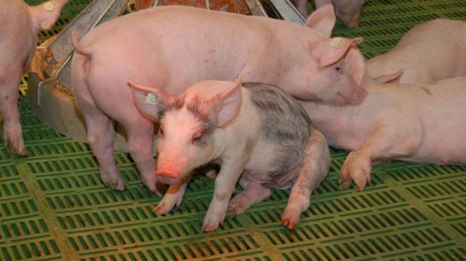 Merkel spricht von Agrarkrise - Foto: Landvolk