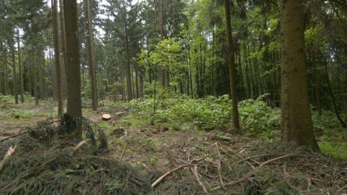 Wild im Wald - Forstwirtschaft heute - Foto: landpixel