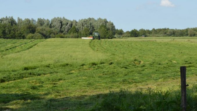 Mehr Klarheit beim Dauergrünland - Foto: Landvolk