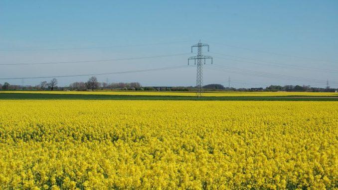 Das erste Gelb zeigt sich auf den Feldern - Foto: Landvolk