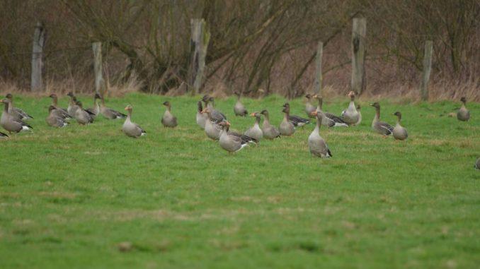 Keine weitere Einschränkung des Jagdrechtes - Foto: Rohloff