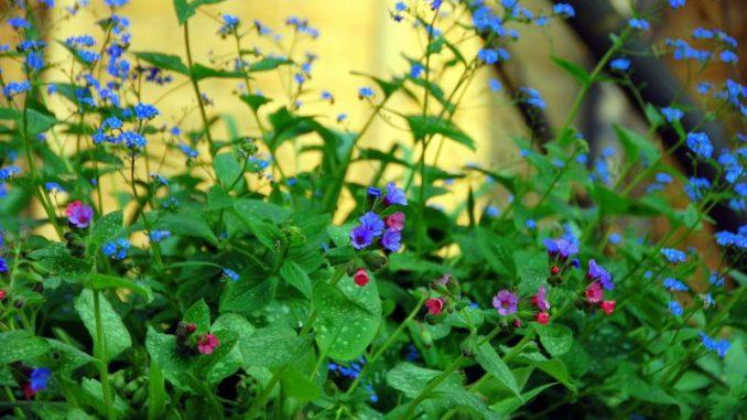 Im Sommerbeet blühen wieder Klassiker - Foto: Grünes Medienhaus