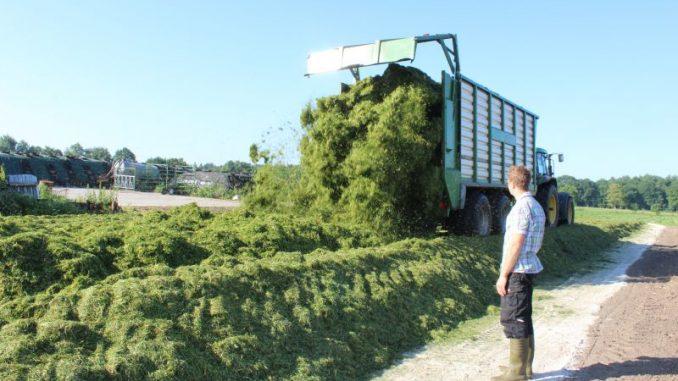 Grassilage wird mit guter Qualität geerntet - Foto: Landvolk