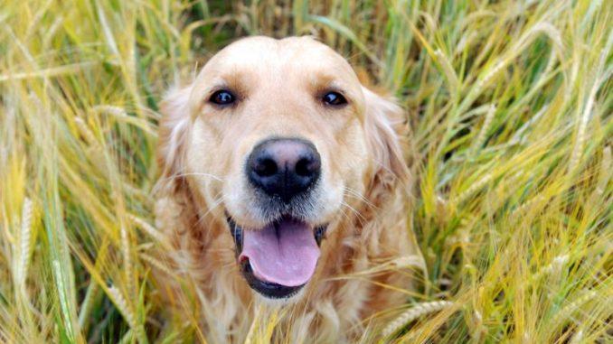 Hundekot gehört nicht auf den Acker - Foto: Landpixel