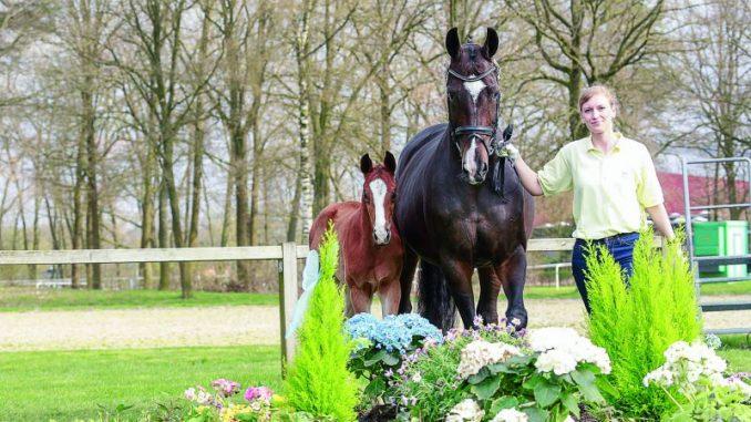 Im Pferdeland Niedersachsen ist jetzt Fohlenzeit - Foto: Hannoveraner Verband e.V.