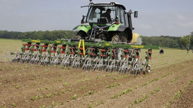 Zuckerrübenanbau steht am Scheideweg - Foto: DNZ