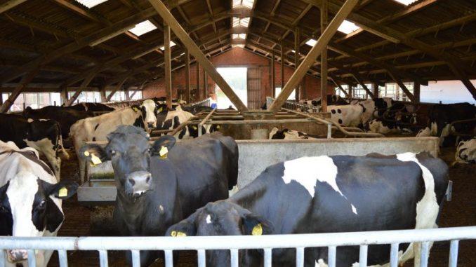 Milcherzeugung seit Quotenende um 3